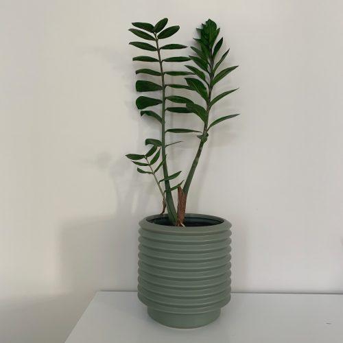 Large Berlin Planter - Eucalypt