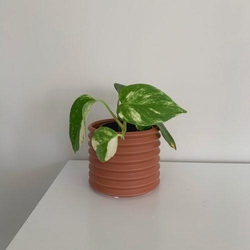 Small Berlin Planter - Rosewood
