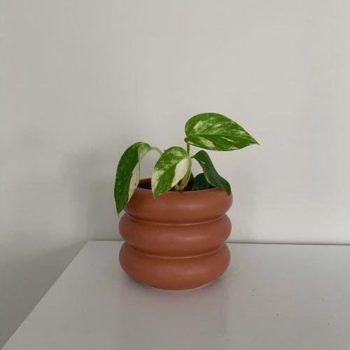 Small Milan Planter - Rosewood