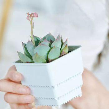Square Succulent Planter Pot - 7CM White